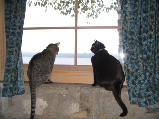 Kitties at the cabin window