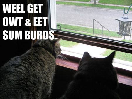 weel get out & eet sum burds