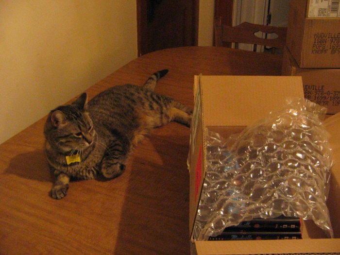 Bertie waits for the boxes to empty